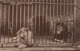 Cincinnati-Lion and Lioness at the Zoological Garden